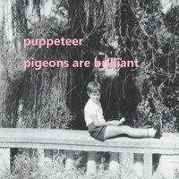 Puppeteer - Pigeons Are Brilliant