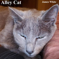 James White - Alley Cat