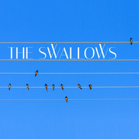 TFM - The Swallows