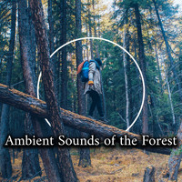 Positive Energy Academy, Nature Music Sanctuary - Ambient Sounds of the Forest - Collection of Wonderfully Relaxing Sounds of Birds, Water and Wind, The Greatest Nature Sounds, Healing Therapy, Harmony of Senses, Feel So Good, Relaxation Breeze
