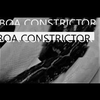 Yammerer - Boa Constrictor
