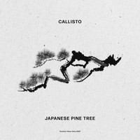 Callisto - Japanese Pine Tree