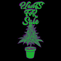 Plants for Sale - Dopamine