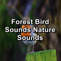Sleep - Forest Bird Sounds Nature Sounds
