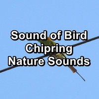Sleep - Sound of Bird Chipring Nature Sounds