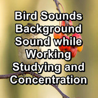 Sleep - Bird Sounds Background Sound while Working Studying and Concentration
