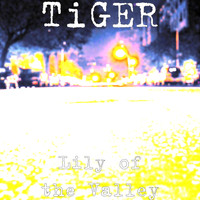 Tiger - Lily of the Valley