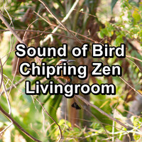 Baby Sleep Music - Sound of Bird Chipring Zen Livingroom