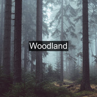 Nature Sounds - Woodland