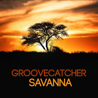 Groovecatcher - Savanna