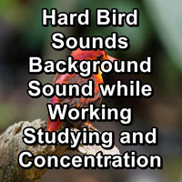 Sleep - Hard Bird Sounds Background Sound while Working Studying and Concentration