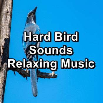 Sleep - Hard Bird Sounds Relaxing Music