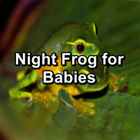 Organic Nature Sounds - Night Frog for Babies