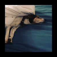 Nerina Pallot - Old Dog, New Tricks