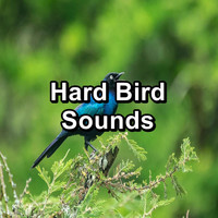 Sleep - Hard Bird Sounds