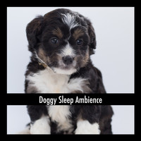Dog Chill Out Music - Doggy Sleep Ambience