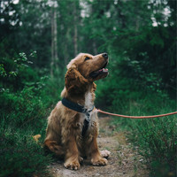 Music for Calming Dogs, Jazz Music for Dogs, Music for Dogs Collective - Relaxation Sounds For Dogs | Yoga and Spa