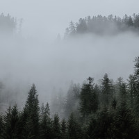 Rain Sounds Rain, Thunder Storm, Sleep Sounds of Nature - A Beautiful Nature Melodies | Instant Stress and Anxiety Relief