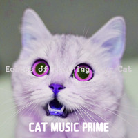 Cat Music Prime - Echoes of Training Your Cat