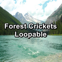 Sleep Crickets - Forest Crickets Loopable