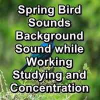 Nature - Spring Bird Sounds Background Sound while Working Studying and Concentration