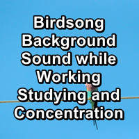 Birds - Birdsong Background Sound while Working Studying and Concentration
