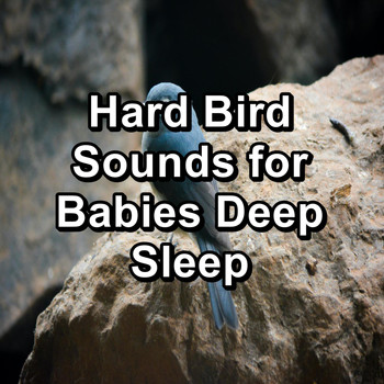 Sleep - Hard Bird Sounds for Babies Deep Sleep