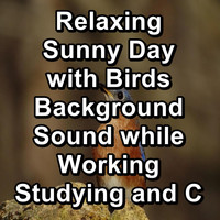 Sleep - Relaxing Sunny Day with Birds Background Sound while Working Studying and Concentration