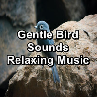 Nature - Gentle Bird Sounds Relaxing Music