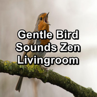 Sleep - Gentle Bird Sounds Zen Livingroom