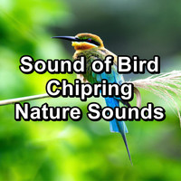 Birds - Sound of Bird Chipring Nature Sounds