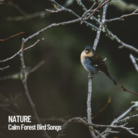 Nature Sounds Nature Music, Sounds of Nature Noise, The Outdoor Library - Nature: Calm Forest Bird Songs