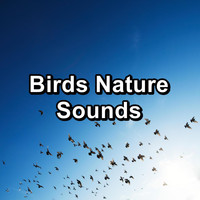 Nature - Birds Nature Sounds