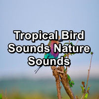 Sleep - Tropical Bird Sounds Nature Sounds
