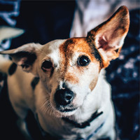 Music For Dogs, Music for Dog's Ear, Calming Music for Dogs - Wonderful Playlist For Dogs | Meditation Focus