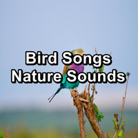 Sleep - Bird Songs Nature Sounds