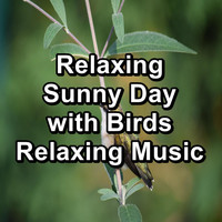 Nature - Relaxing Sunny Day with Birds Relaxing Music