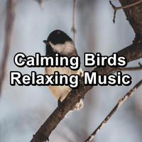 Nature - Calming Birds Relaxing Music
