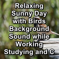 Nature - Relaxing Sunny Day with Birds Background Sound while Working Studying and Concentration