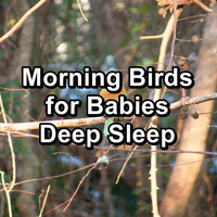 Sleep - Morning Birds for Babies Deep Sleep